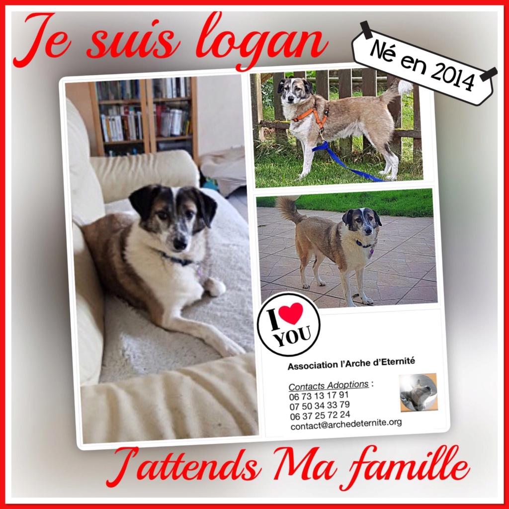 LOGAN (gabarit petit/moyen) - né en 2014 EN FA DANS LE 60, rescapé d'Oltenita, parrainé par Fanfounette et Mirko78 - R-SOS-SC-30MA - Page 4 02987a10