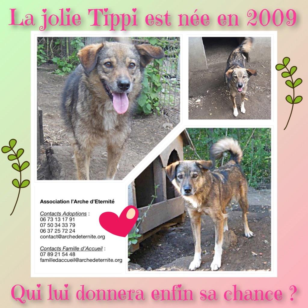 TIPPI - Très jolie femelle X berger poils mi-longs - née en 2009 - parrainée par Edni94 - R-SC- SOS - Page 3 066fa110