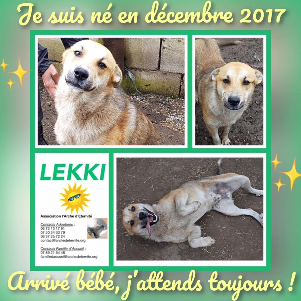 LEKKI (grand gabarit) - né le 28/11/2017 - bb de Elena -  EN FA DANS LE 72- Marrainé par Dianou -R-SOST-SC-30MA- 21c19410