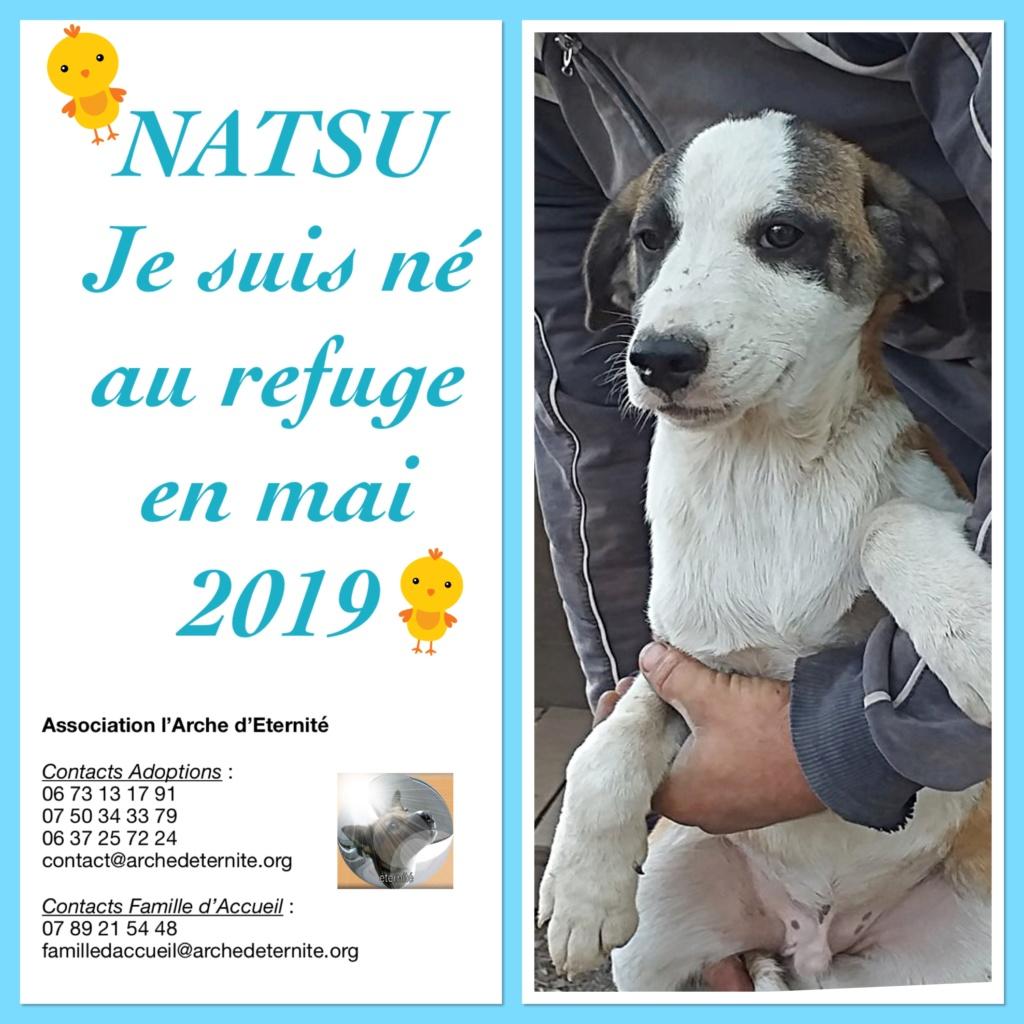 NATSU chiot mâle de Vitae - tricolore - né le 04/05/2019 en FA dans le 08 R-SC 26dfad10