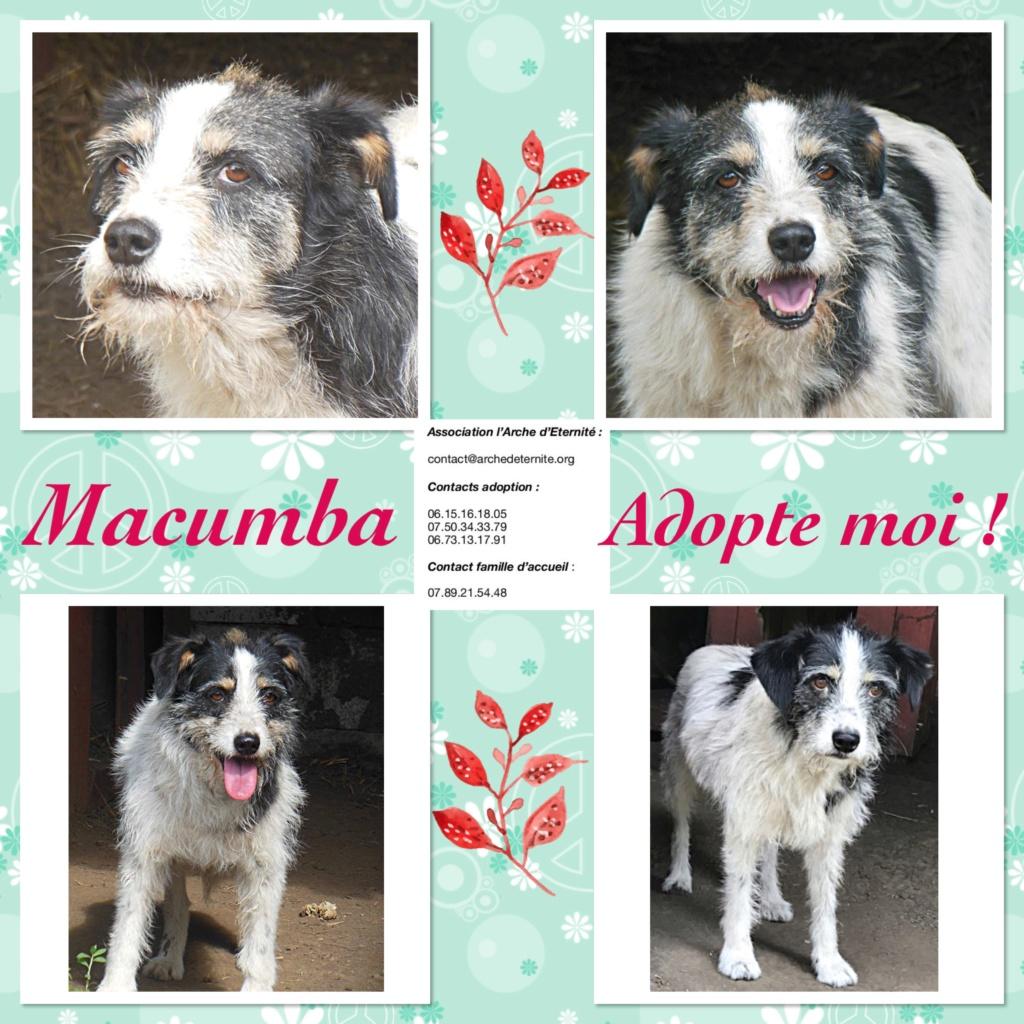 MACUMBA - griffon 8 ans  (4 ans de refuge) -Asso Arche d'Eternité (Roumanie) 4f659710