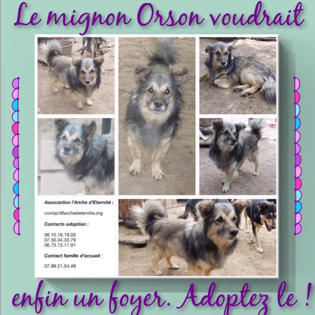 ORSON, mâle né en 2012 sauvé de léquarrissage en Juin 2018- en FA dans le 27 -R-30MA- 5c9ef710