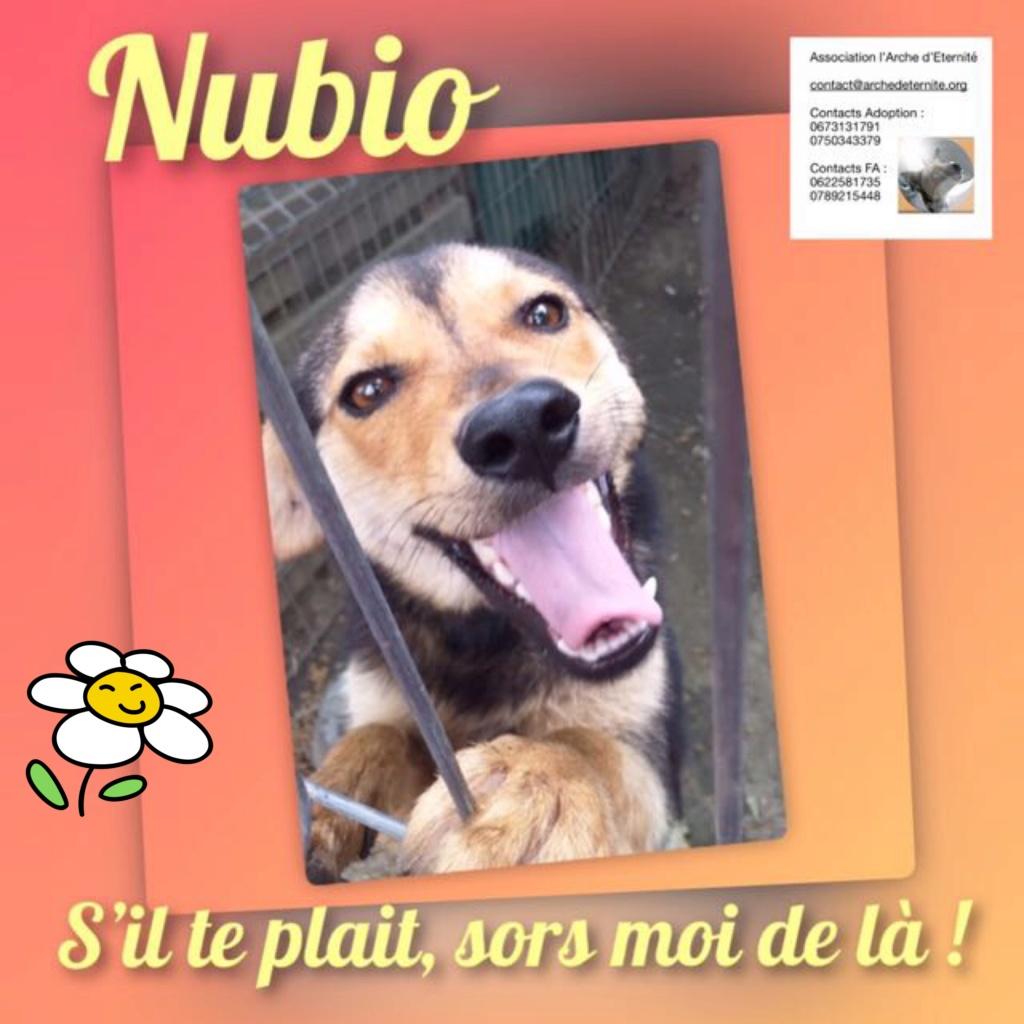 nubio - NUBIO, male né le 10/10/2016, trouvé dans un champs- marrainé par Natarya - R-SC-30MA 69540e10