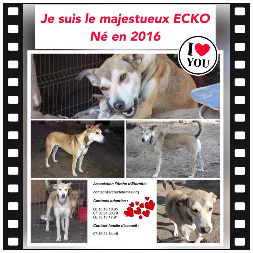 ECKO, mâle, né en Février 2016, équarrissage de PALLADY - parrainé par Nelly69-SOS-SC-R- - Page 3 9e3e1110
