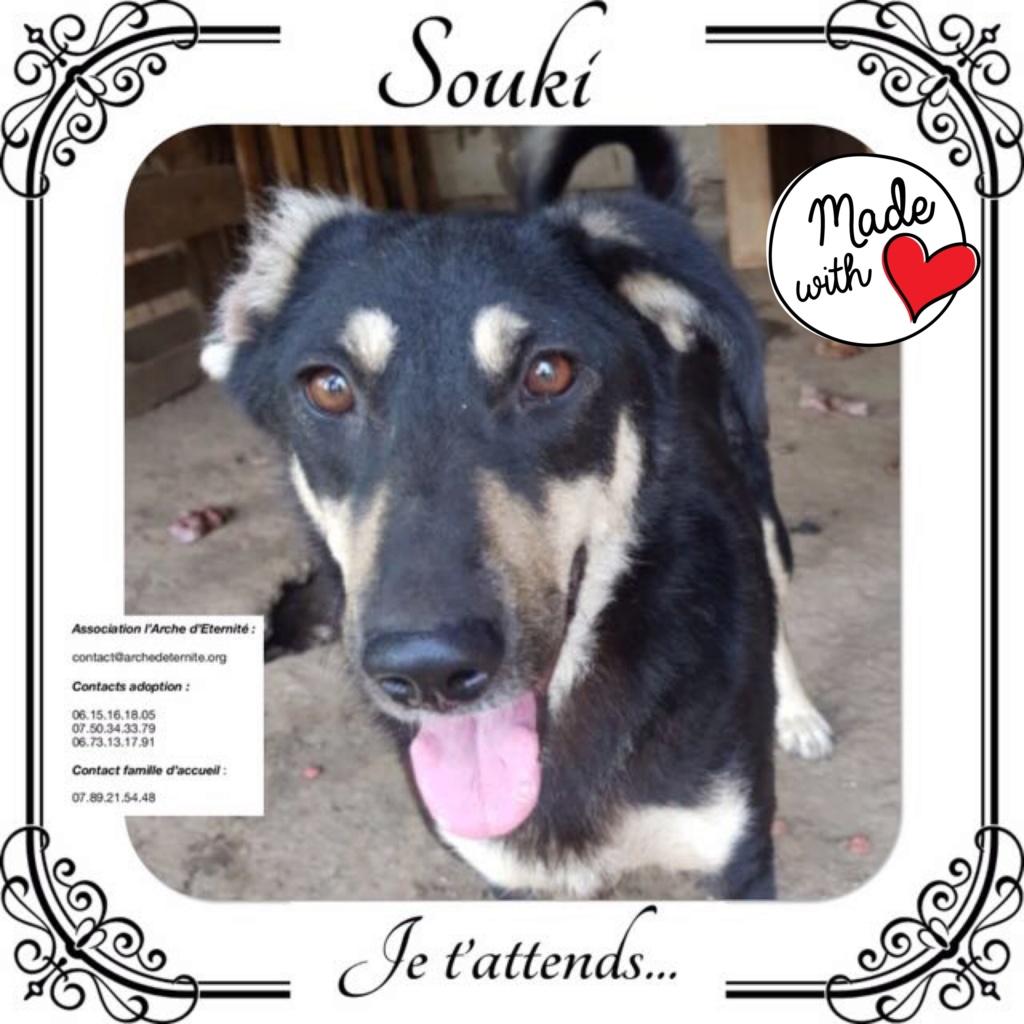 SOUKI, Femelle type berger, née en 2014 - Noire et crème- marrainée par Myri_Bonnie -R-SC-SOS- A420dc10