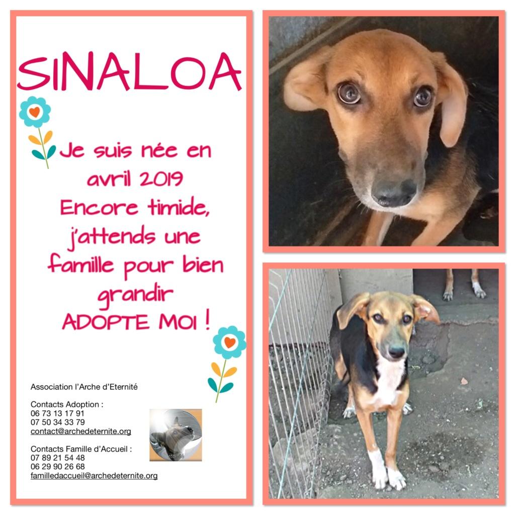 SINALOA- femelle , née en 03/2019 - amenée par Oana -R-SC C7d82c10