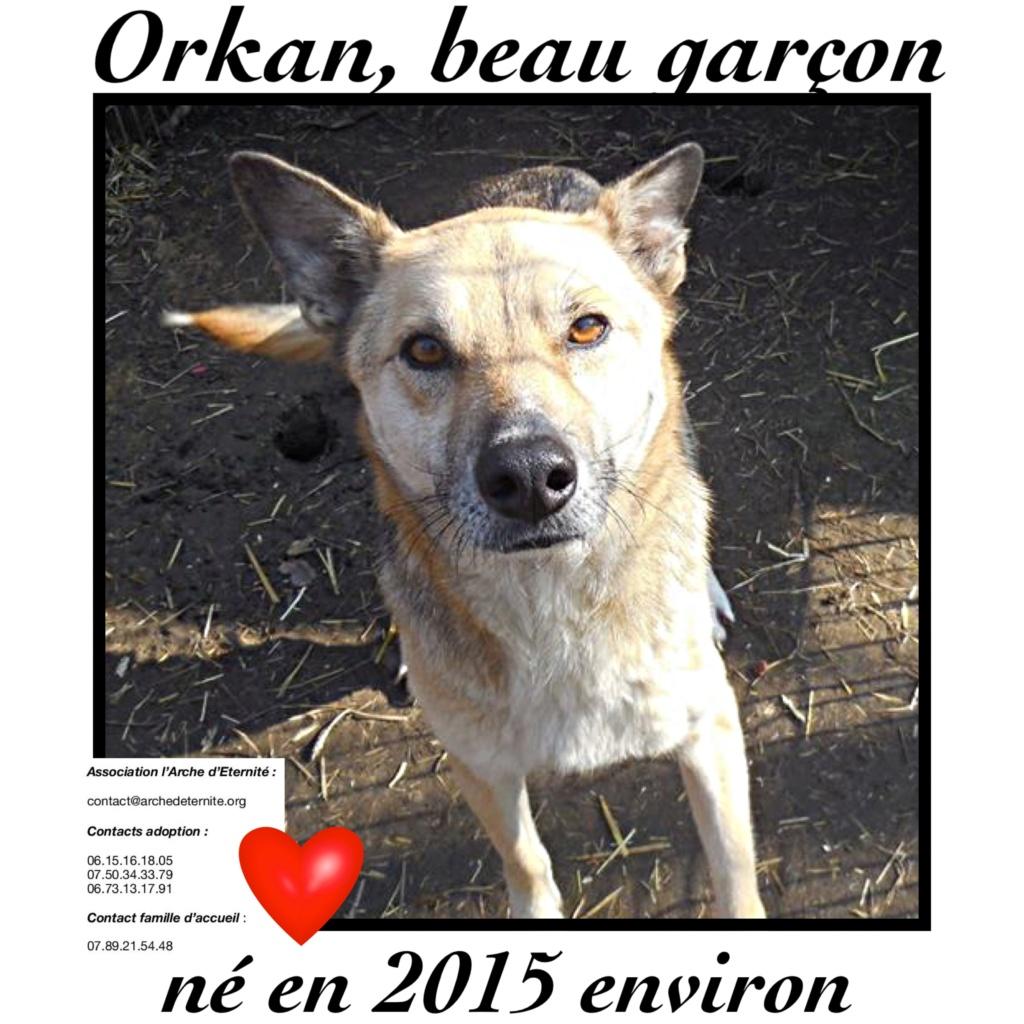 orkan - ORKAN , NE LE 10/05/2015  type berger trouvé avec une chaîne le 18 nov 2018- en FA dans le 80 - marrainé par flomyspra  -R-SOS-SC-30MA F255aa10