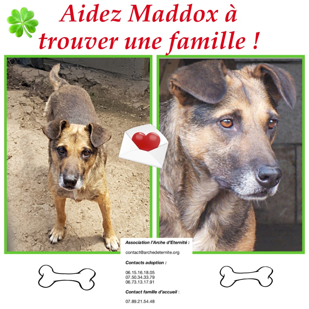 MADDOX - x berger allemand 9 ans (7 ans de refuge)  Asso Arche d'Eternité - Lenuta (Roumanie)- F9cb7110