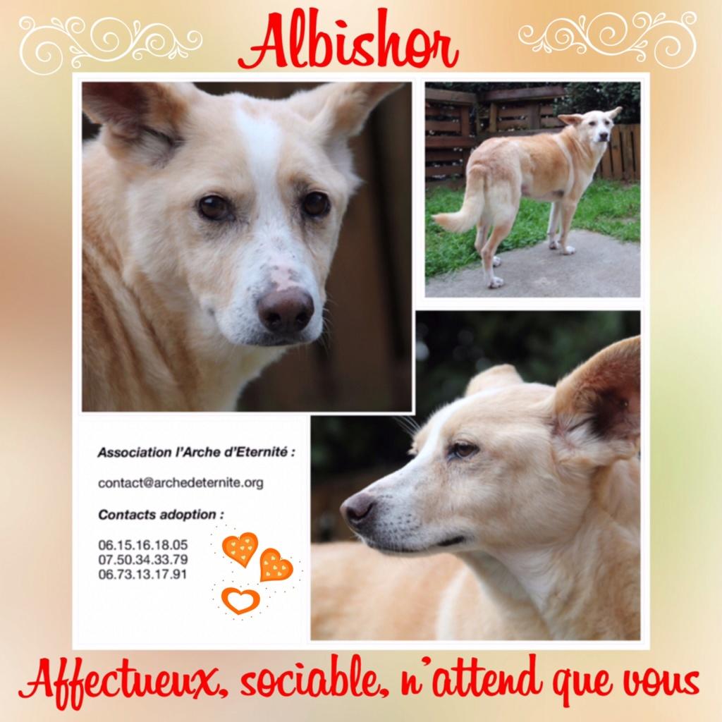 ALBISHOR 2 - NE en 2007 - EN FA DANS LE 72 - PARRAINE PAR REGLISSE -SOS-R-SC-30MA - Page 4 Ff332710