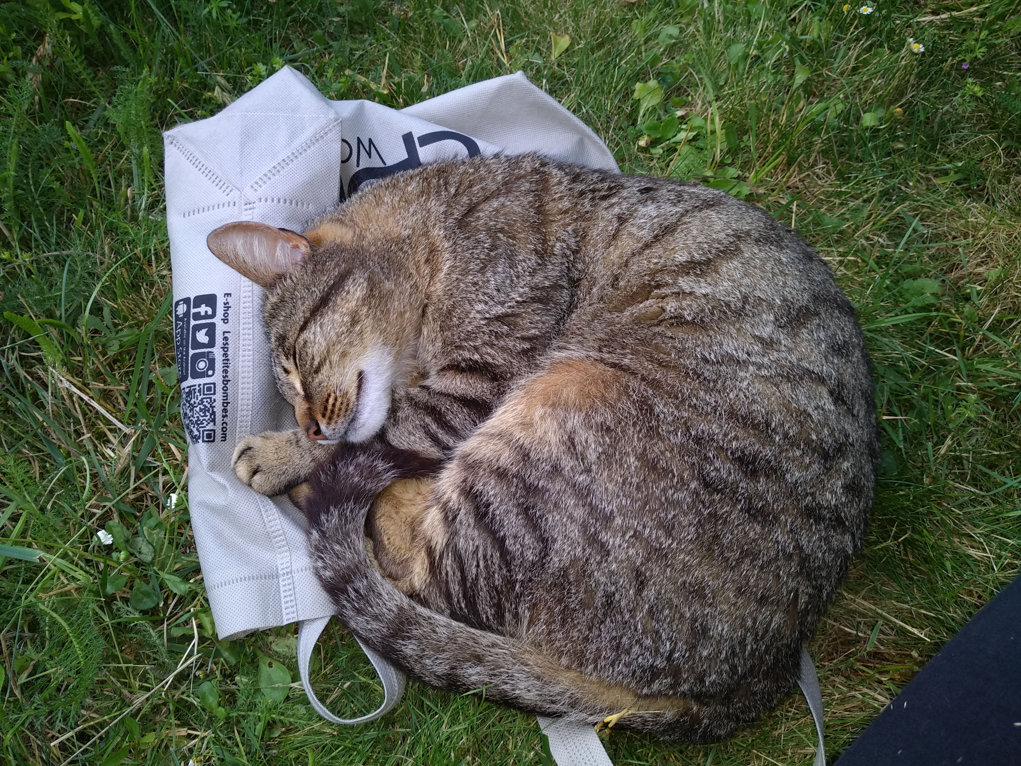 Trouvé chat Rennes Sud Img_2010