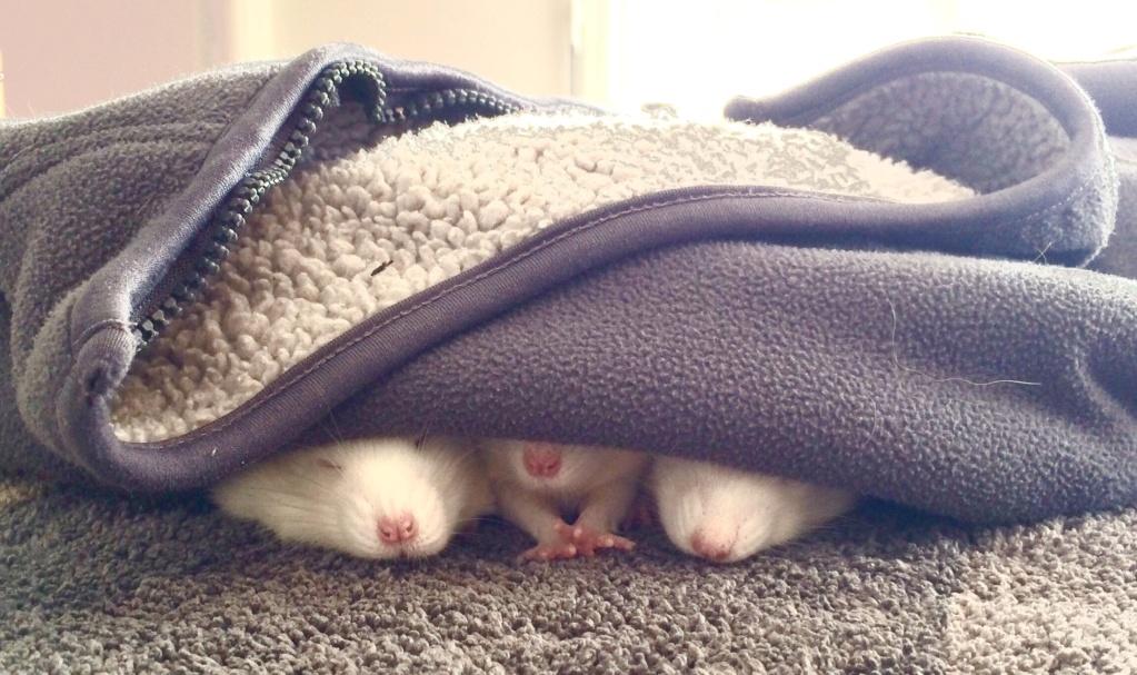 Garde de trois ratous début septembre File1-10