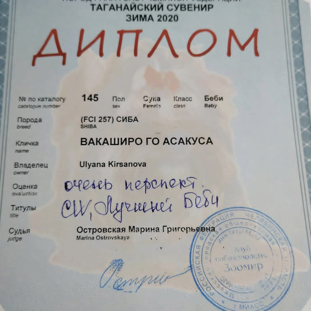 Щенки питомника Асакуса - Страница 2 Iazznp10