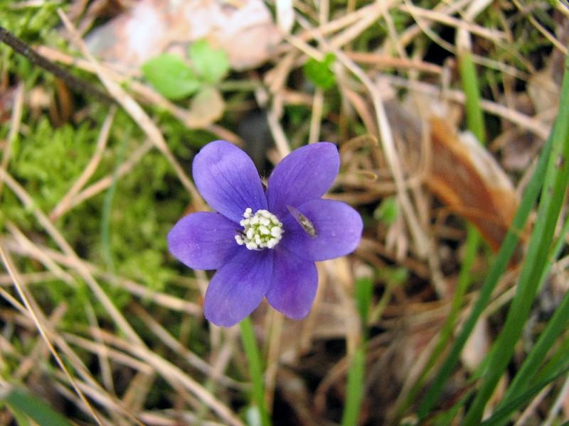 Erste Frühlingsboten im Garten und in Wald und Flur - Seite 95 Img_3515