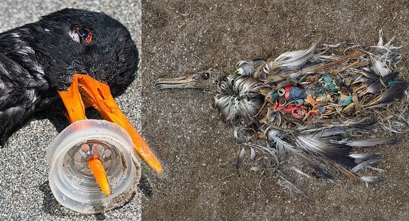 Ces plastiques biodégradables qui ne le sont PAS A11