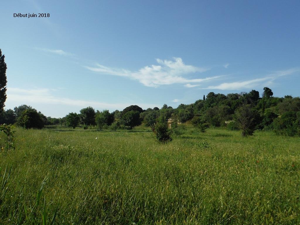 JdB de 4 hectares de pâtures dans le SUD : Avril 2019, et toujours la sécheresse... - Page 9 10023p10