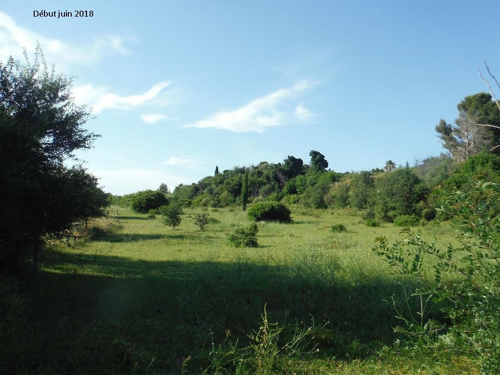 JdB de 4 hectares de pâtures dans le SUD : Avril 2019, et toujours la sécheresse... - Page 9 1023pa10