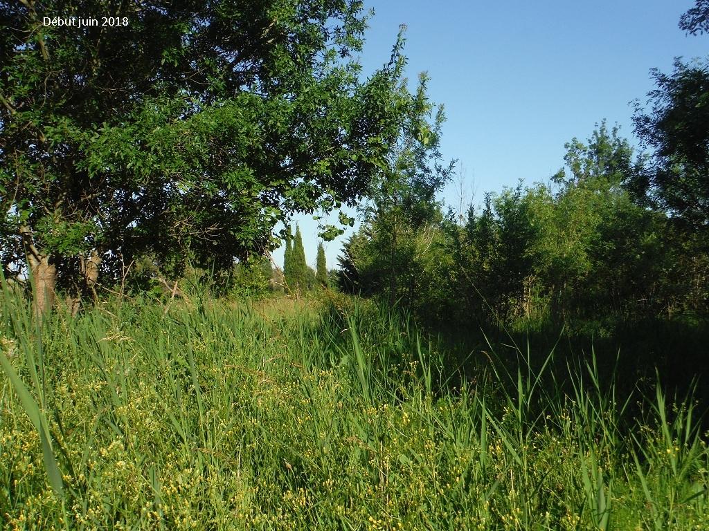 JdB de 4 hectares de pâtures dans le SUD : Avril 2019, et toujours la sécheresse... - Page 9 12023p10