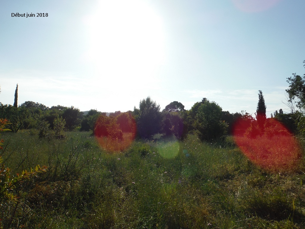 JdB de 4 hectares de pâtures dans le SUD : Avril 2019, et toujours la sécheresse... - Page 9 15023p10