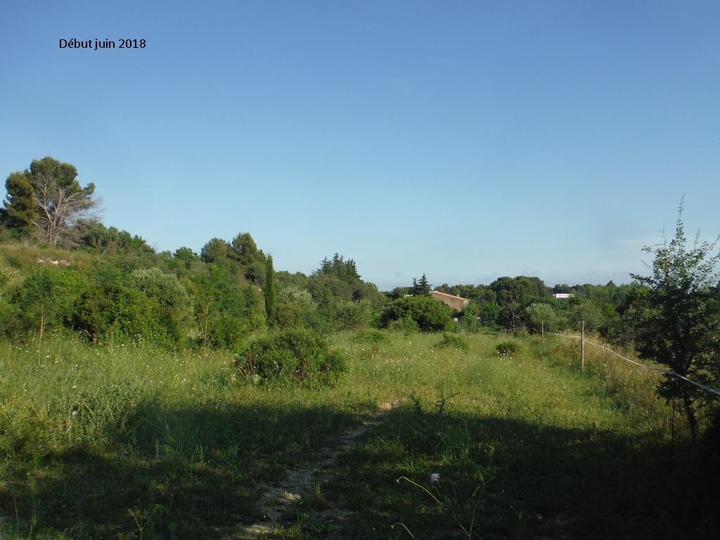 JdB de 4 hectares de pâtures dans le SUD : Avril 2019, et toujours la sécheresse... - Page 9 2023pa10