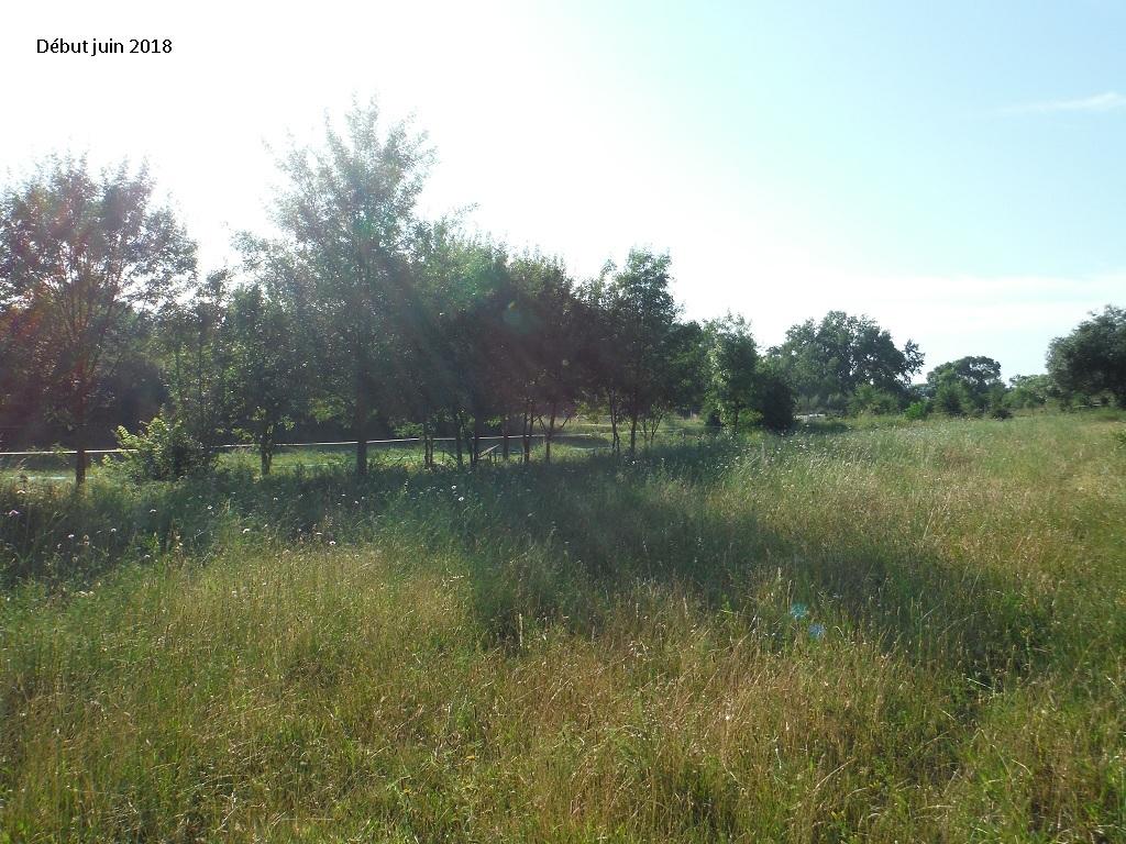 JdB de 4 hectares de pâtures dans le SUD : Avril 2019, et toujours la sécheresse... - Page 9 6023pa10