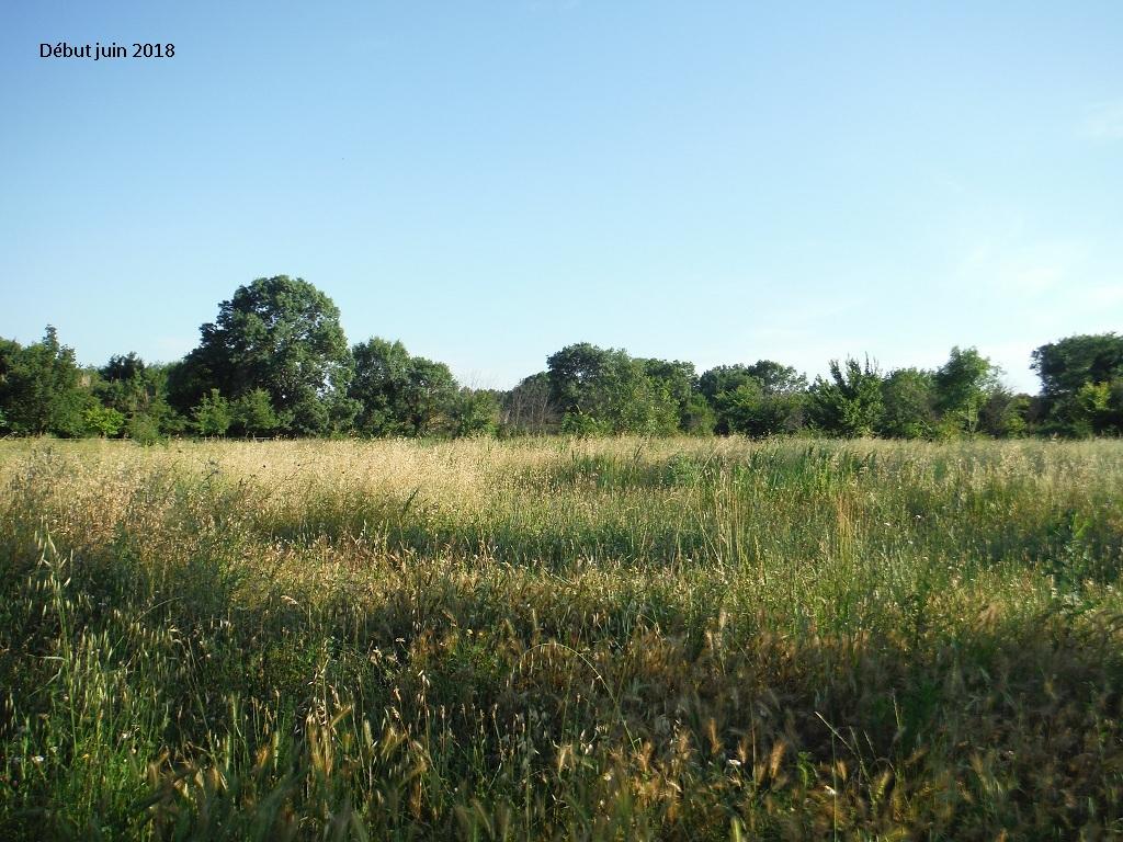 JdB de 4 hectares de pâtures dans le SUD : Avril 2019, et toujours la sécheresse... - Page 9 8023pa10
