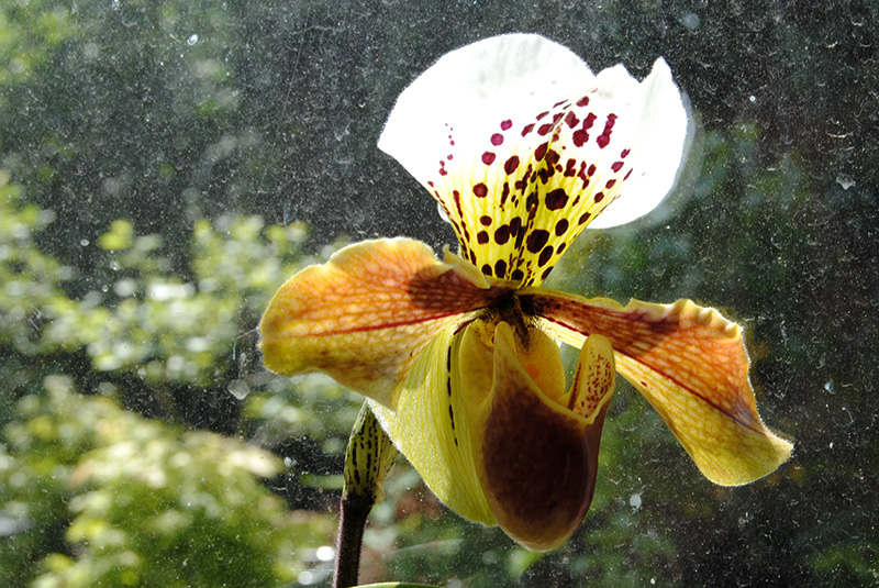 orchidées - floraisons du moment 2018 - Page 3 210