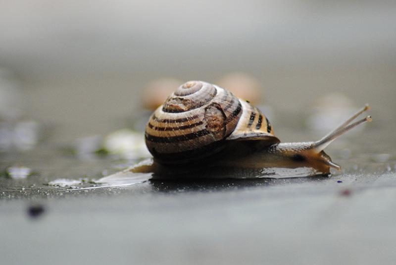 alerte limaces, escargots et autres ennemis des plantes - Page 2 610