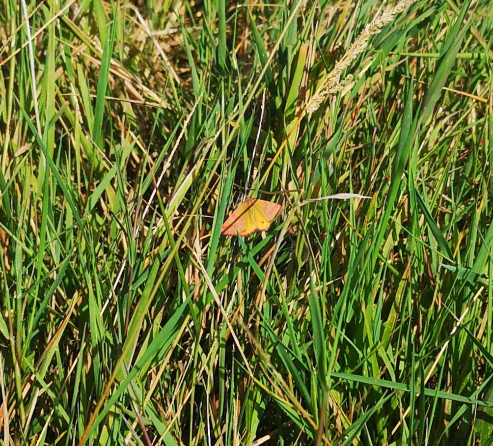Identification papillon 20200811