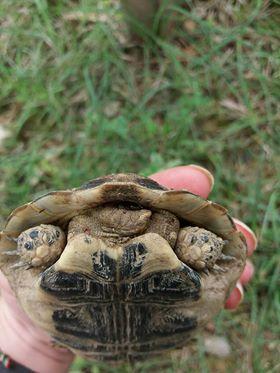 identification tortue.  34877810