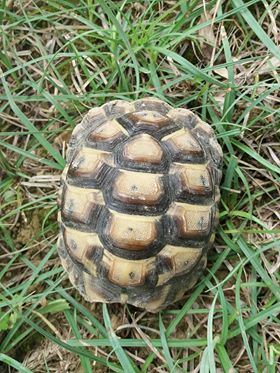 identification tortue.  34962210