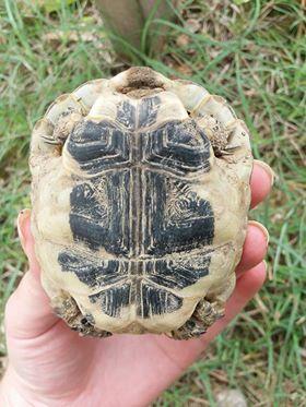 identification tortue.  35148710