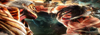 Shingeki no Kyojin RolePlay /Afiliación Élite 100x3510