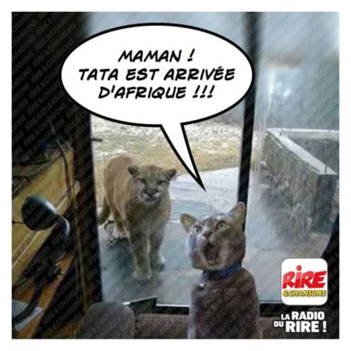 un petit  clic pour les animaux - Page 35 0a0b0c13
