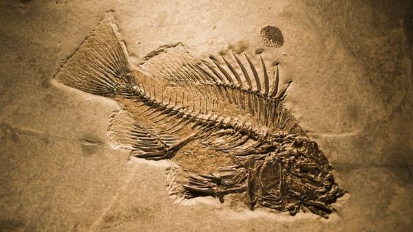 Il y a 10 000 ans, les Hommes mangeaient des poissons pêchés dans des lacs du Sahara 1une-s10