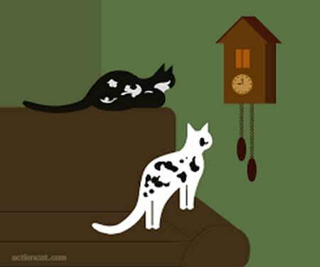 un petit  clic pour les animaux - Page 40 Animau10