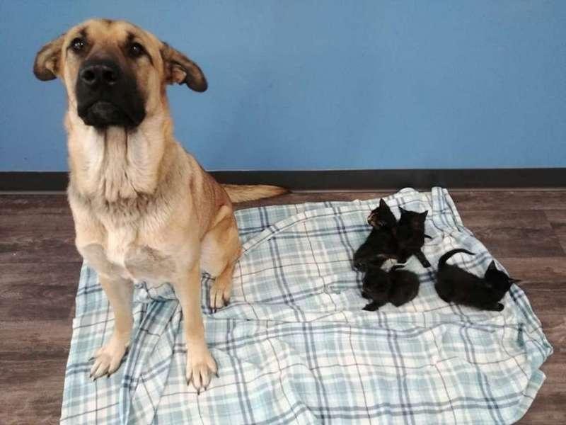 Canada : un chien errant sauve du froid des chatons abandonnés Canada10