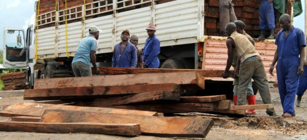 Inquiétude autour du pillage d'un bois menacé d'extinction Rdc_et10
