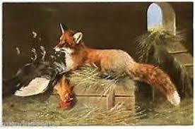 Bretagne: un renard tué par des poules dans un poulailler. Tzolzo10