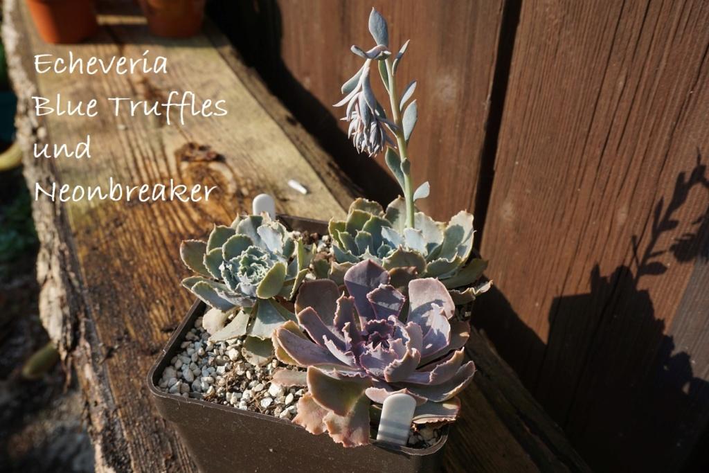 Mein Paradies... (Karin) - Seite 19 Dsc06818