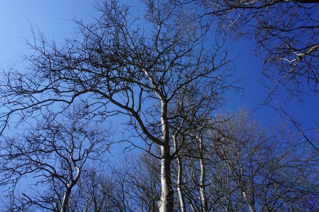 Erste Frühlingsboten im Garten und in Wald und Flur - Seite 92 Dsc09722