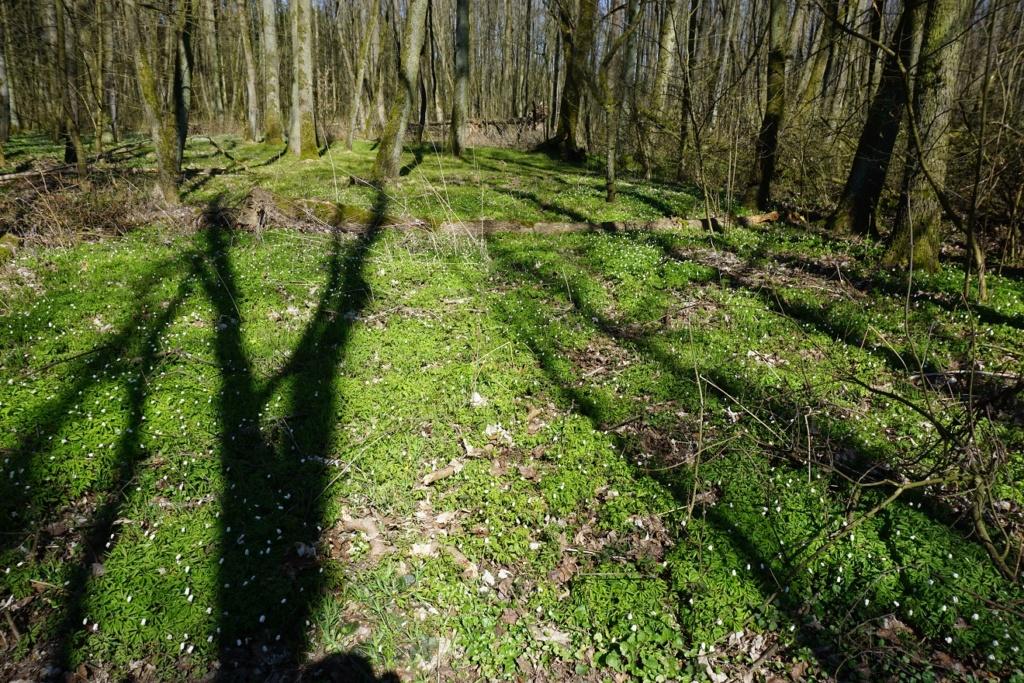 Erste Frühlingsboten im Garten und in Wald und Flur - Seite 92 Dsc09816