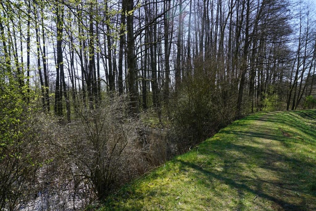 Erste Frühlingsboten im Garten und in Wald und Flur - Seite 92 Dsc09817