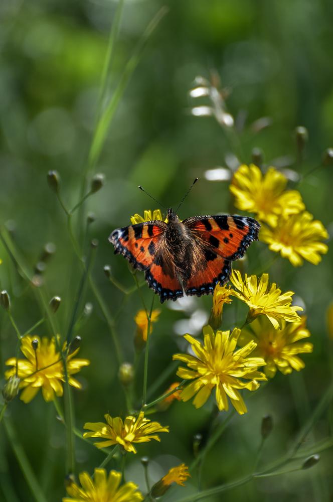 [Macro_et_Proxy] Papillon Boisba13