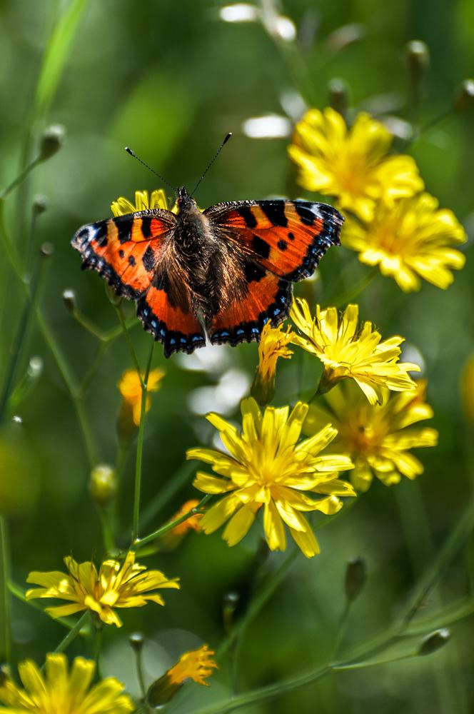 [Macro_et_Proxy] Papillon Boisba15