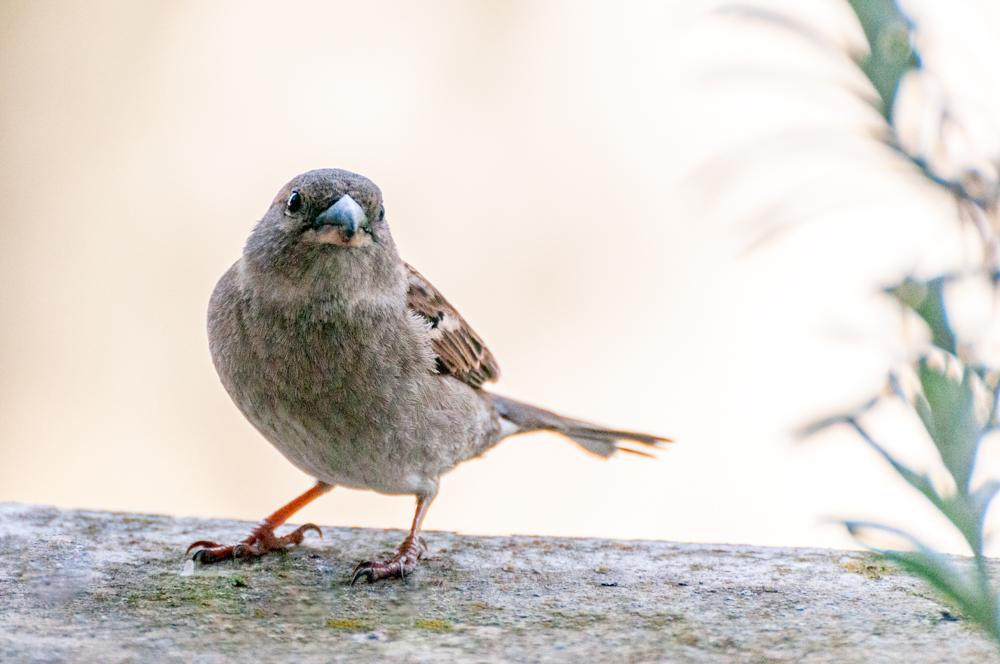 [Animaux] Zozio 1/5 Oiseau27