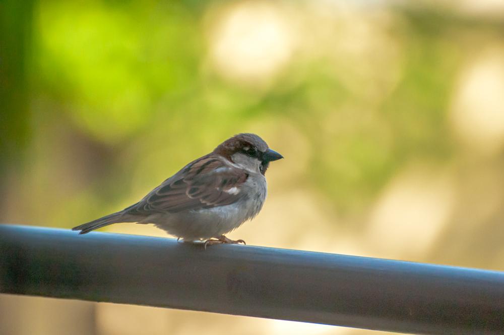 [Animaux] Zozio 2/5 Oiseau28