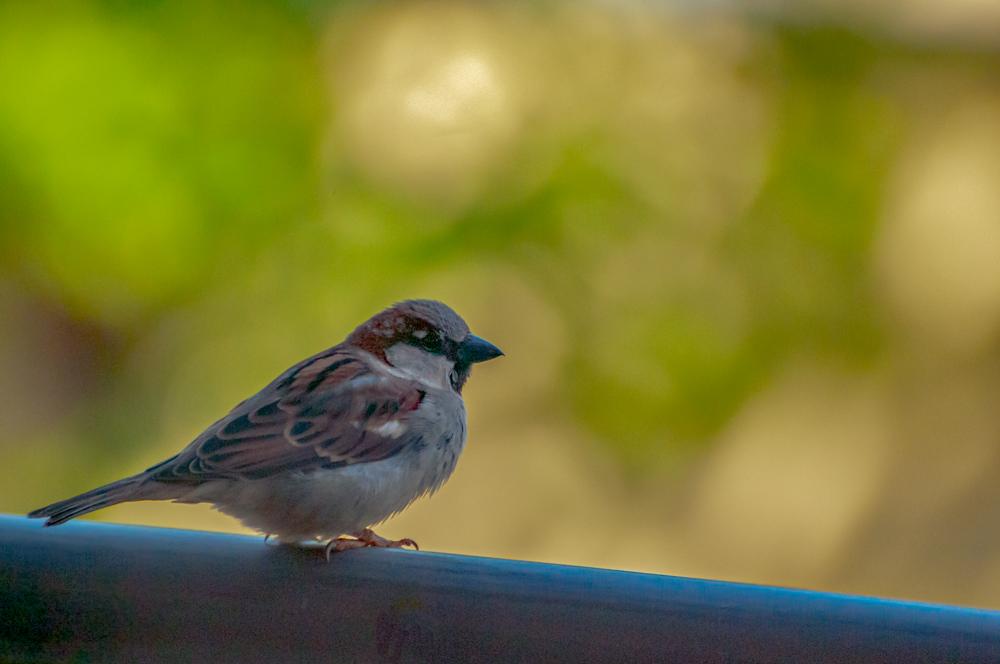 [Animaux] Zozio 2/5 Oiseau30