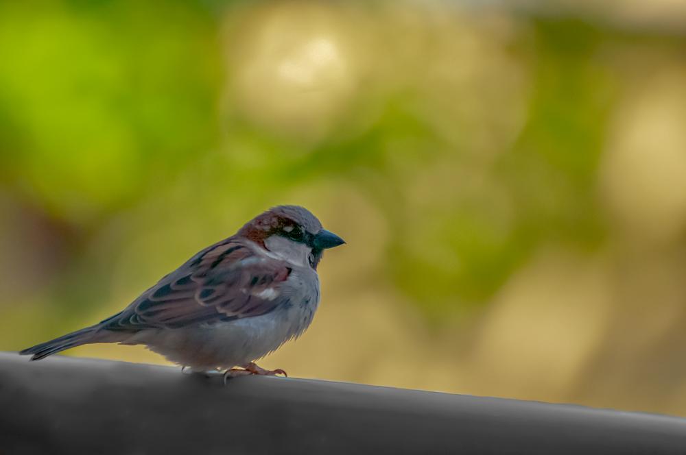 [Animaux] Zozio 2/5 Oiseau31