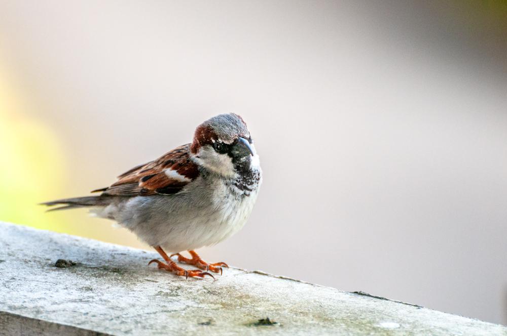[Animaux] Une dernière Oiseau39