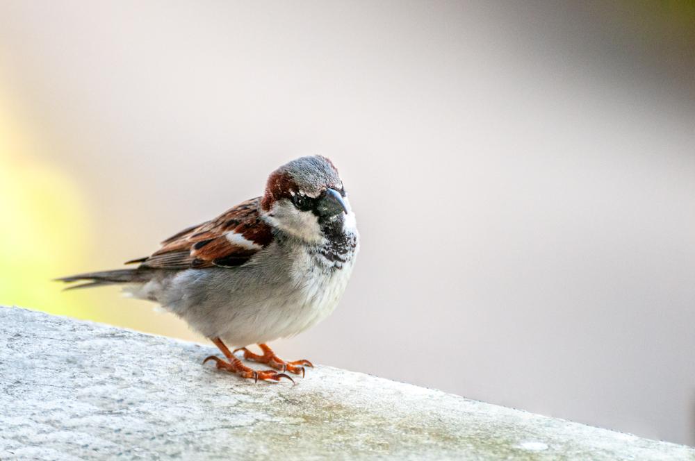 [Animaux] Une dernière Oiseau42